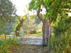 The Garden in front of Casetta Corteccia