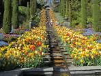 Genuss auf der Mainau: Tausend und eine Blüte