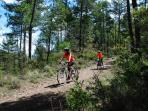 Excursiones en bici