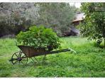 Gardens, Olive groves, Orange trees and geraniums