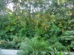 View from balcony. Surrounded by nature with a feeling of being in a tree house!