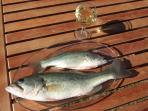 Bonne pêche accompagnée d un petit verre de Bergerac blanc