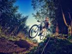 Cycling at Haldon a forest