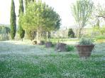 Pini e cipressi in giardino