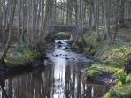 Enchanting trail through Ardwell Woods