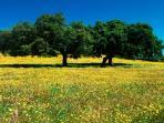 Primavera en Alajar, Sierra de Aracena