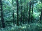 Our beautiful 10 acre ancient woodland