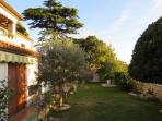 The garden and the olive tree