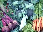 Lovely fresh seasonal veg grown here on the farm. Stock up from the farm honesty shop