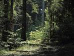 Forêt de Roquedols