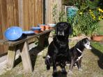 Max and Scarlett sunbathing out side the pottery with some of Vicky's serving dishes!