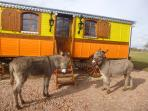 With donkeys