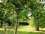 Lie back in the gite orchard