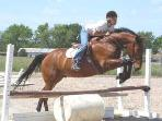 Equestrian schools and shows