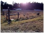 A beautiful fall day  in the Black Hills. Sit back, relax and take a walk away from it all.