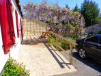 The wisteria in full bloom, it grows bigger and more colourful every spring.