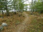 Pathway from cabin to lake
