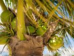 Enjoy Fresh Coconut Water. Photo Courtesy of Ashley Loveless Photography.