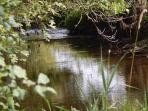Eden water, a tributary of the Tweed meandering through our organic farm