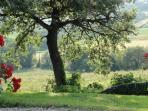 Rosa nel Pozzo: uitzicht en omgeving