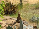 Buddha in the succulent garden