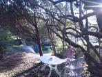 pranzare all'ombra degli ulivi