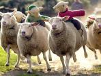 Visit The Big Sheep!