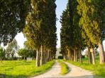 Ingresso Agriturismo Il Bosco, Viale di Cipressi