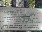 Explore the South Grove of Calaveras Big Trees State Park