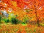 The fall offers a rich array of colors.