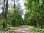 La Forêt et la Piste cyclable