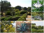 Overview of our gardens