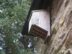 Bat's also welcome in our bat boxes outside