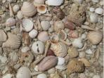 A treasure trove of sea shells just lying on the beach right outside your door.