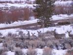 Daily visiting wildlife in all seasons - deer, elk, coyotes and more!