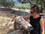 this is quiet Greece - you can still find a donkey to talk to!