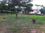 Our Camping area in our beautiful yard.
