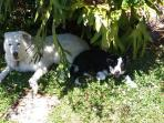 all furkids big and small  love the gardens