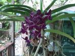 Patio orchid