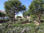 Juan Flore gardens