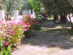 Apartments are set amongst olive trees and a garden
