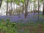 Blue bell dell just 2 mins walk from the house.