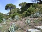 Natural rock face with agaves