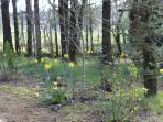 Cabin woodland gardens