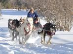 During winter months dogsledding is available