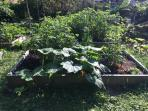 Big yard with outdoor vegetable garden in the summer