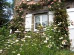 En Juin , les roses et les grandes marguerites.
