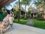 Our three legged watch dog/ love mascot, Spot.
