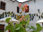 Cordoba province is famous for its flower-filled patios, ours is usually very colourful