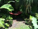Hammock nestled in the trees is a great quiet corner to read a book - or fall asleep trying to read